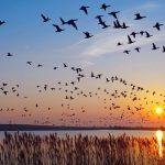 Día Mundial De Las Aves Migratorias Post